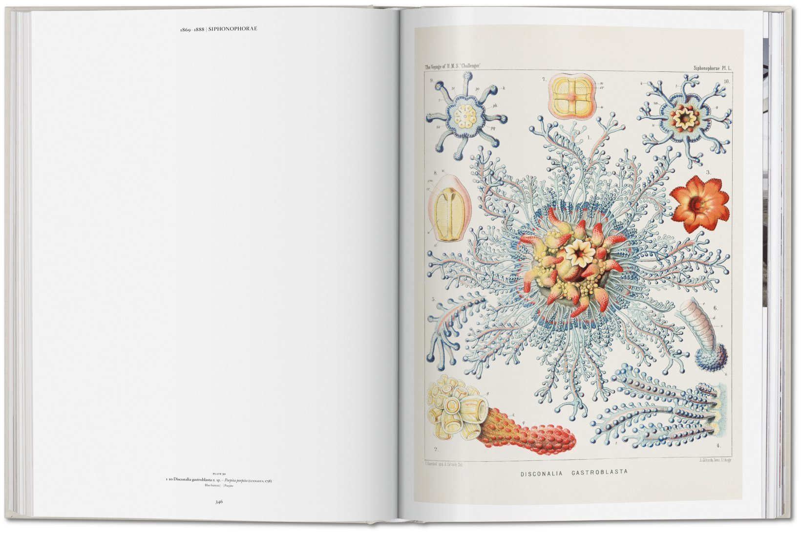The Art and Science of Ernst Haeckel 7