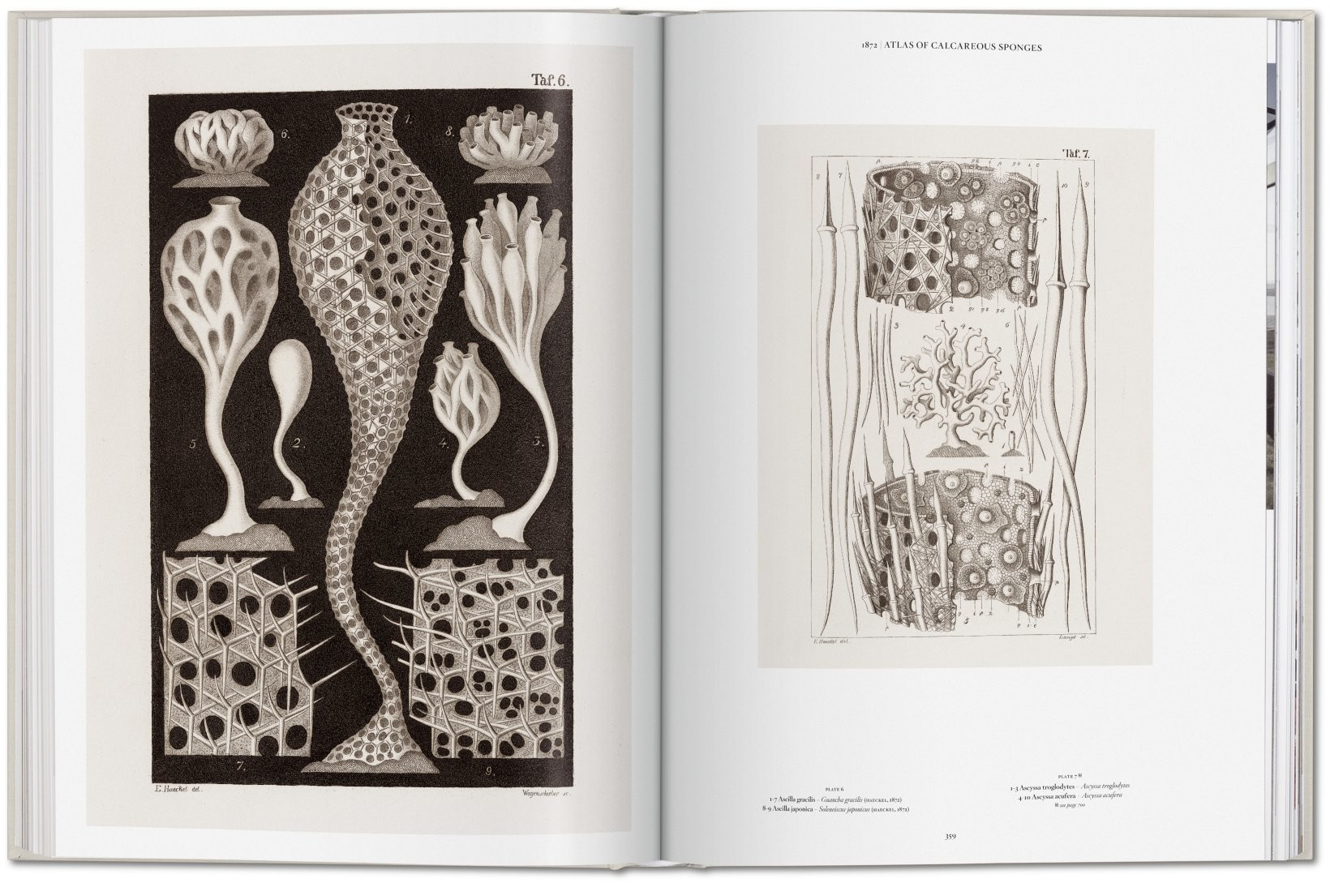 The Art and Science of Ernst Haeckel 8