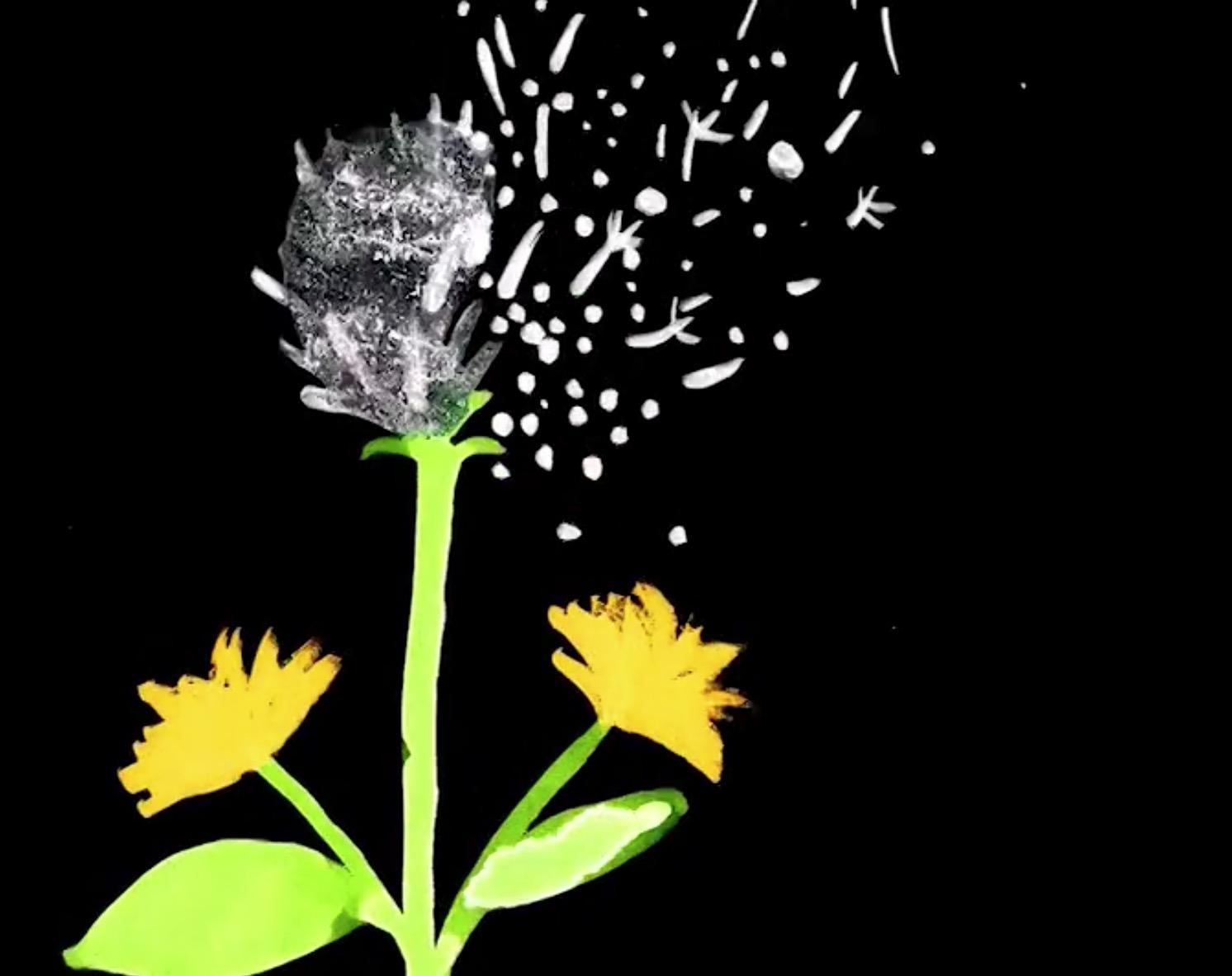 fiori di tarassaco 6