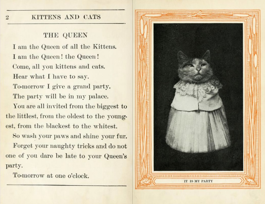 kitten and cats 1