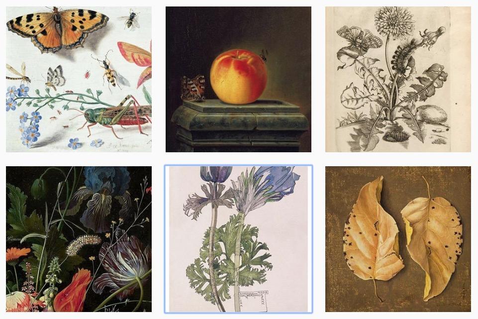 art herbarium 2