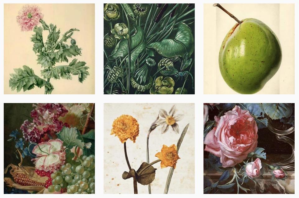 art herbarium 4