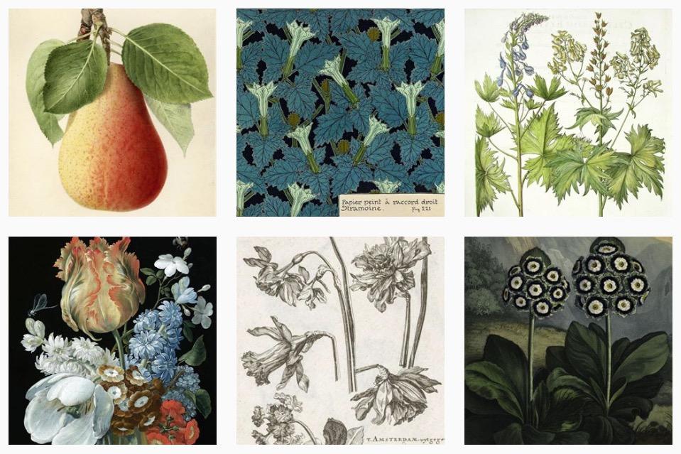 art herbarium 7