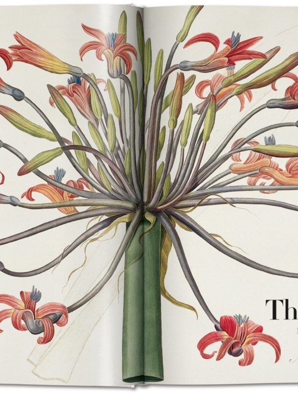 the book of flowers 2