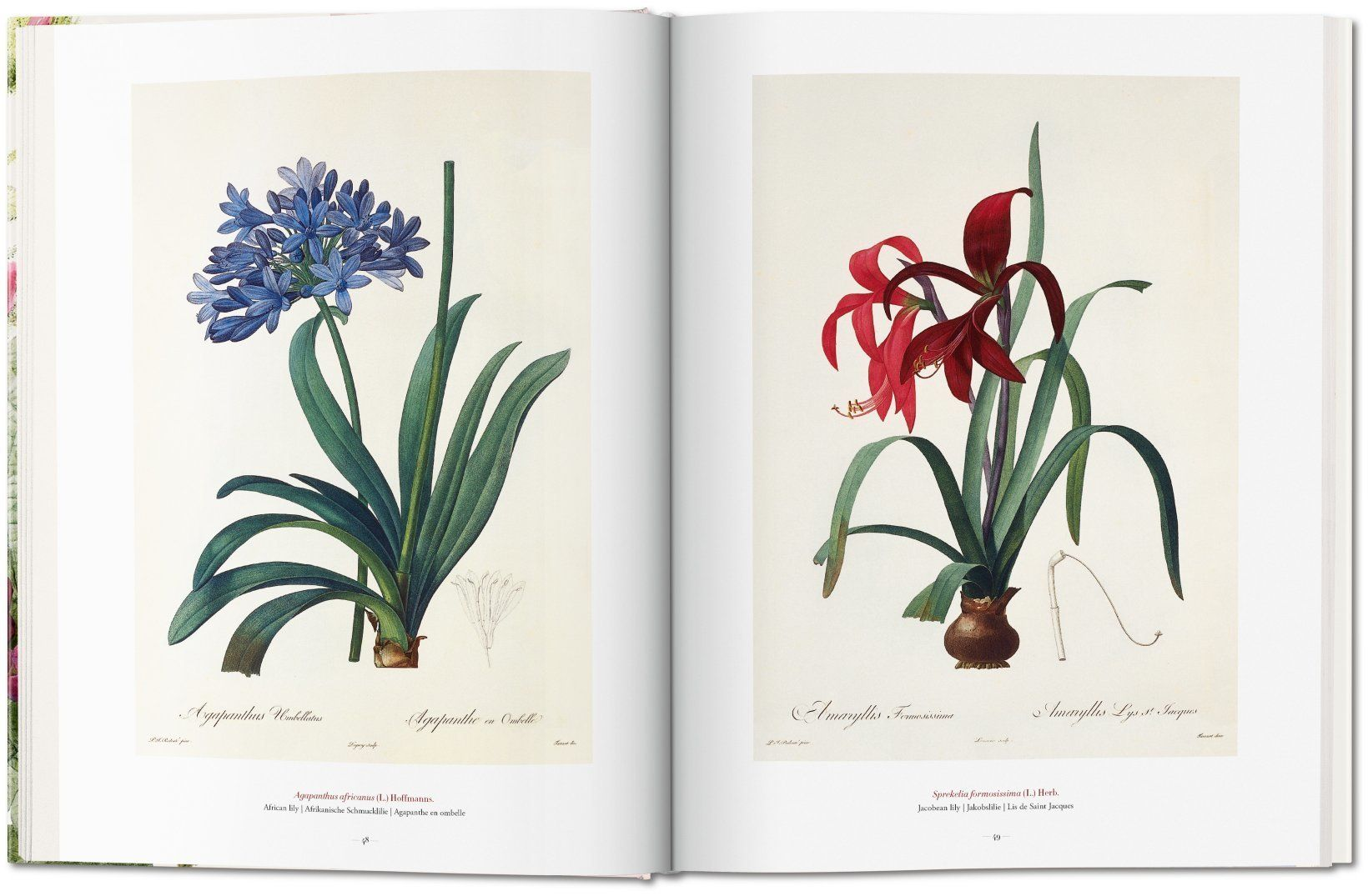 the book of flowers 3