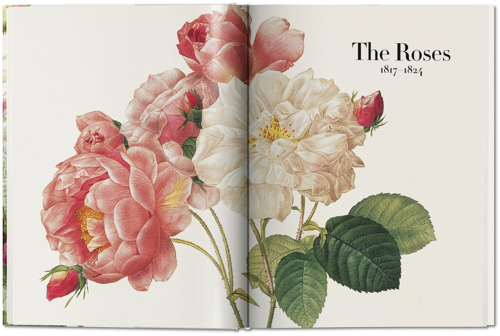 the book of flowers 4