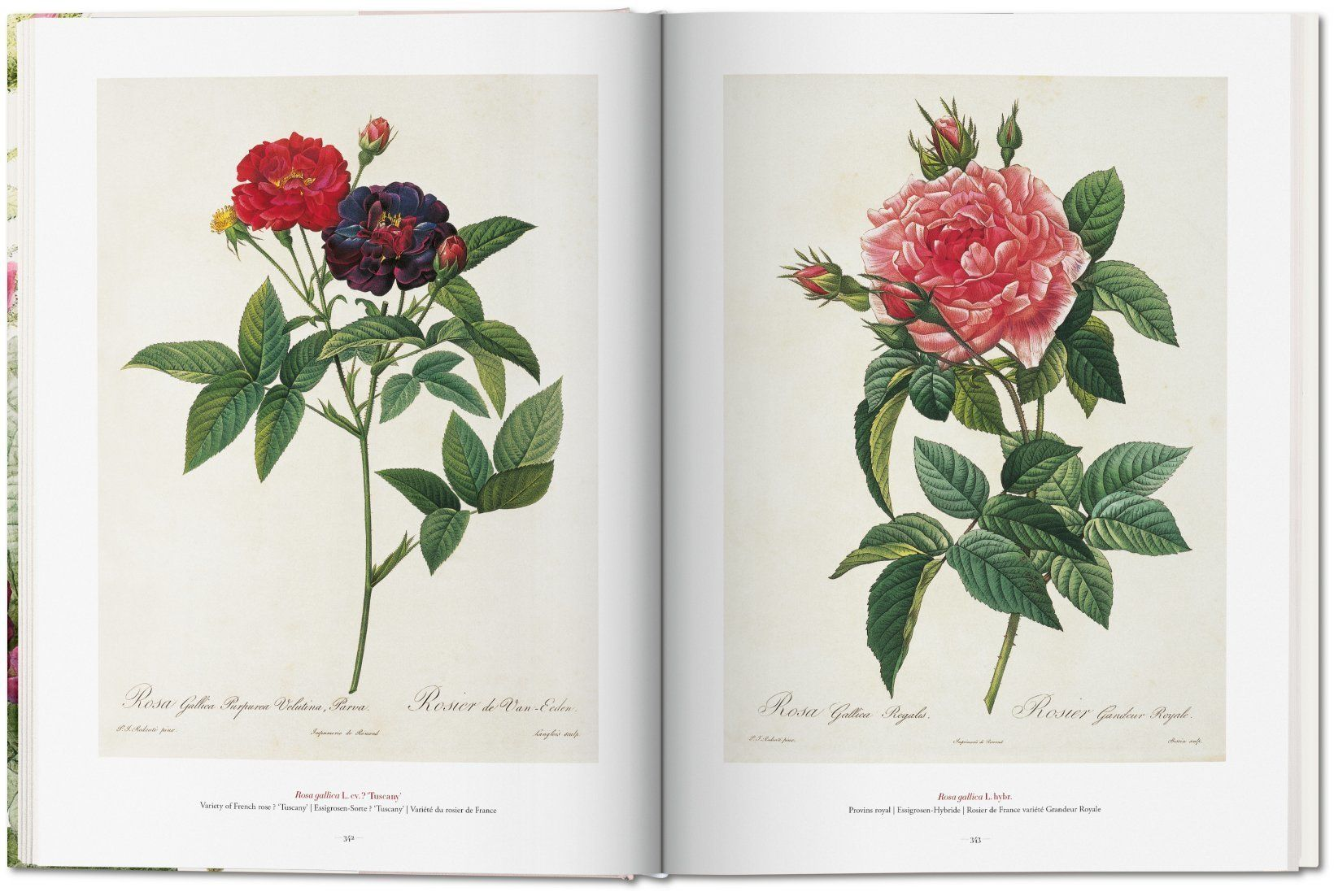 the book of flowers 5