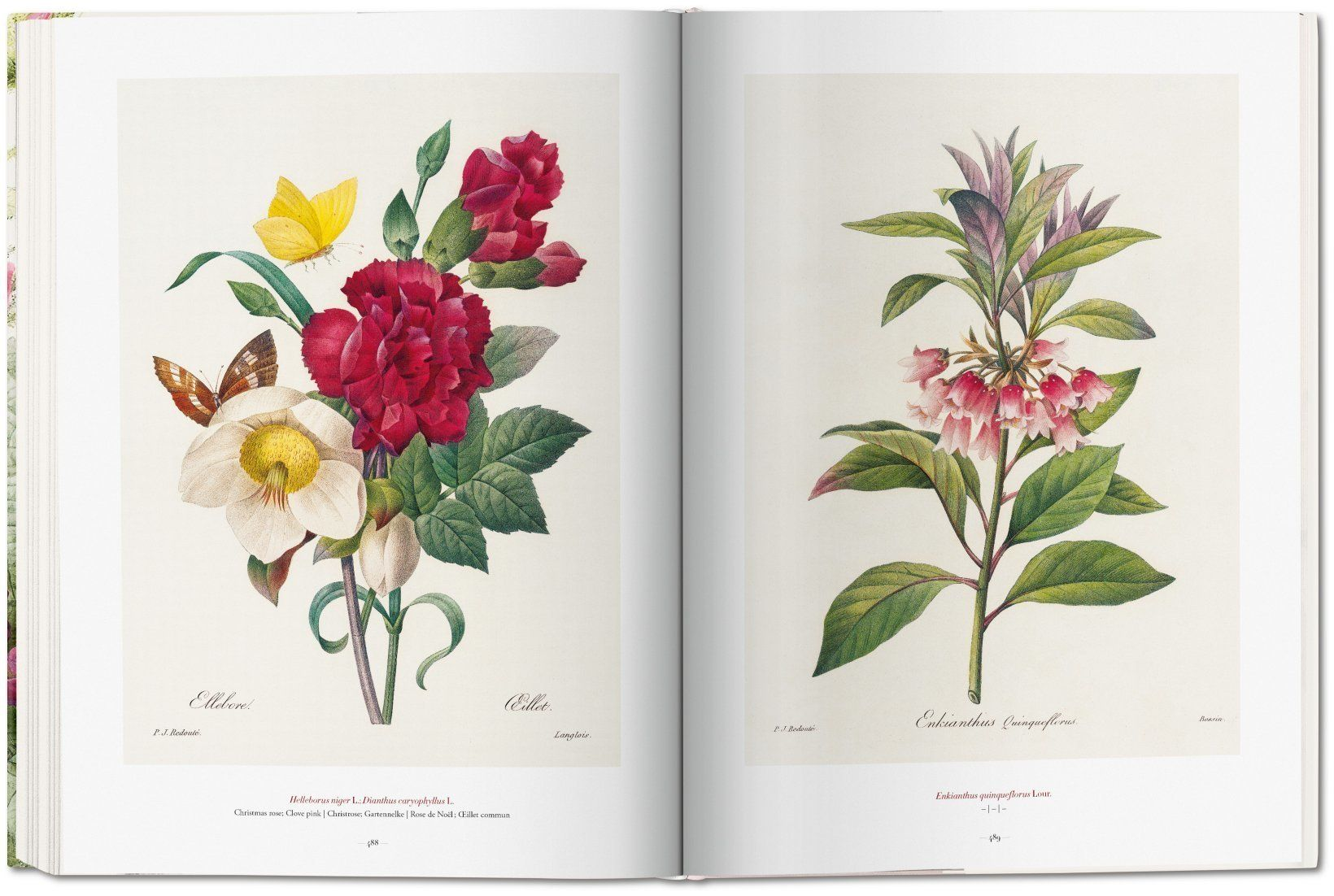 the book of flowers 7