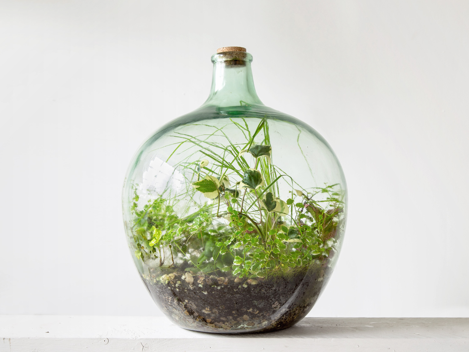 london terrarium 4