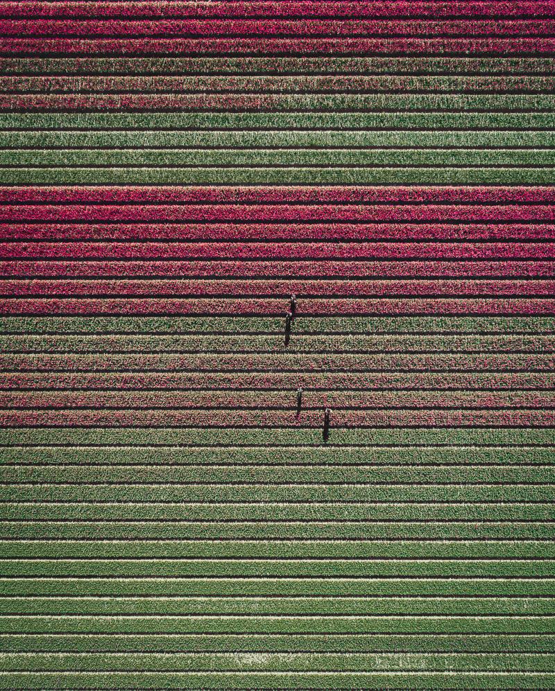 tom hegen tulip 5