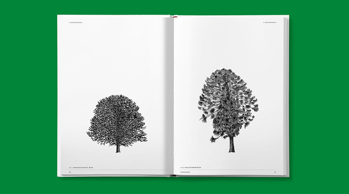 lazydog architettura alberi 3