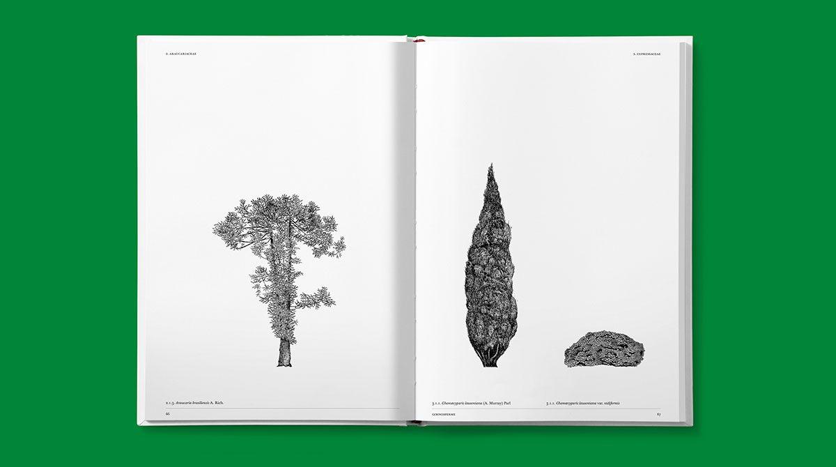 lazydog architettura alberi 4