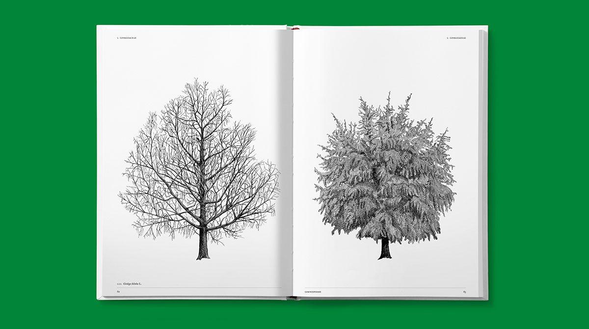 lazydog architettura alberi 5