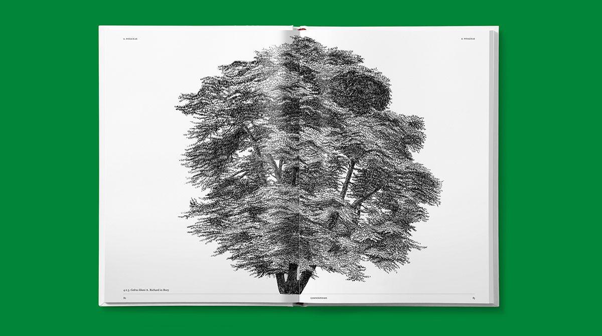 lazydog architettura alberi 6