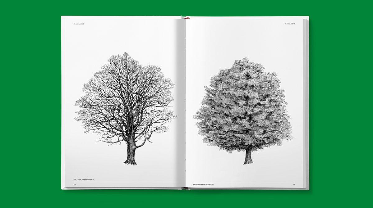 lazydog architettura alberi 7