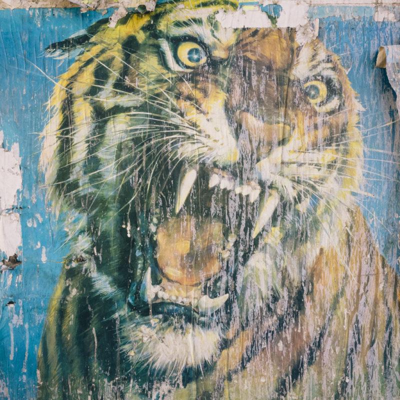 Tigre e1552993581632