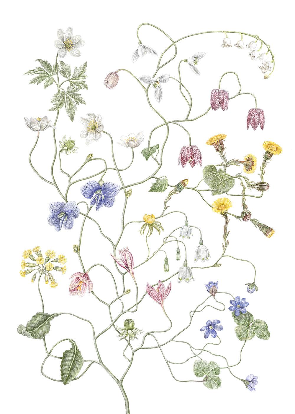 Le illustrazioni botaniche di Jonna Fransson