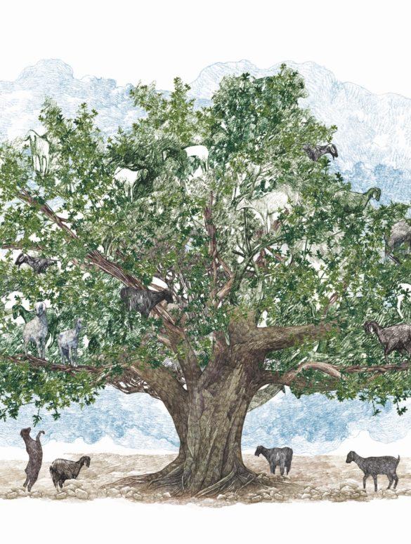 il giro del mondo in 80 alberi 4