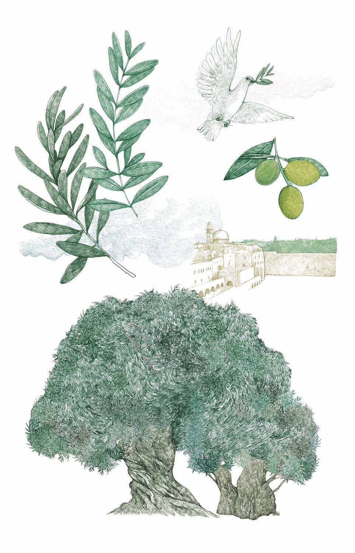 il giro del mondo in 80 alberi 5