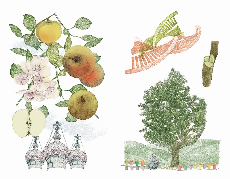 il giro del mondo in 80 alberi 6