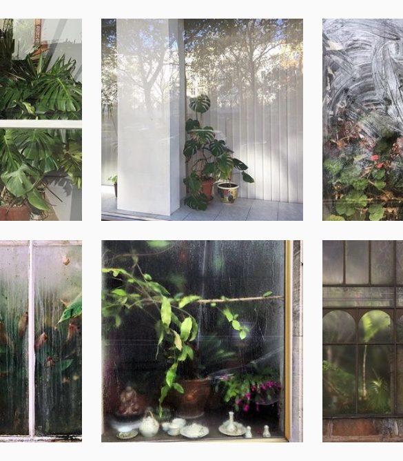 plantsatthewindow 1