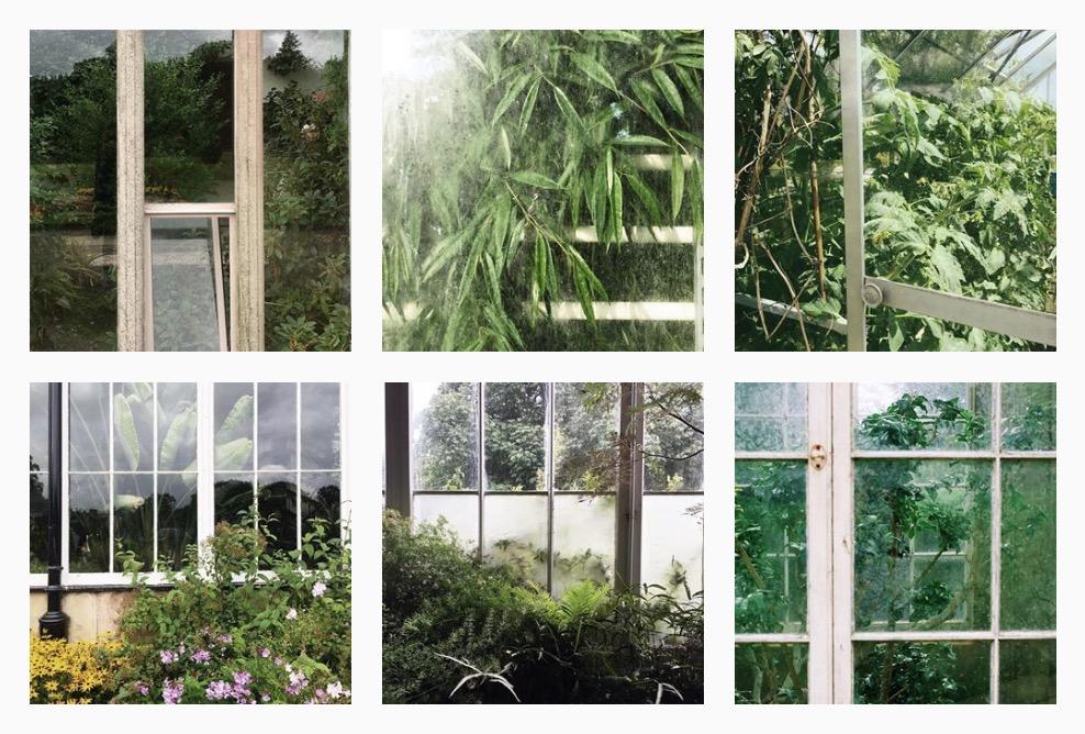 plantsatthewindow 4
