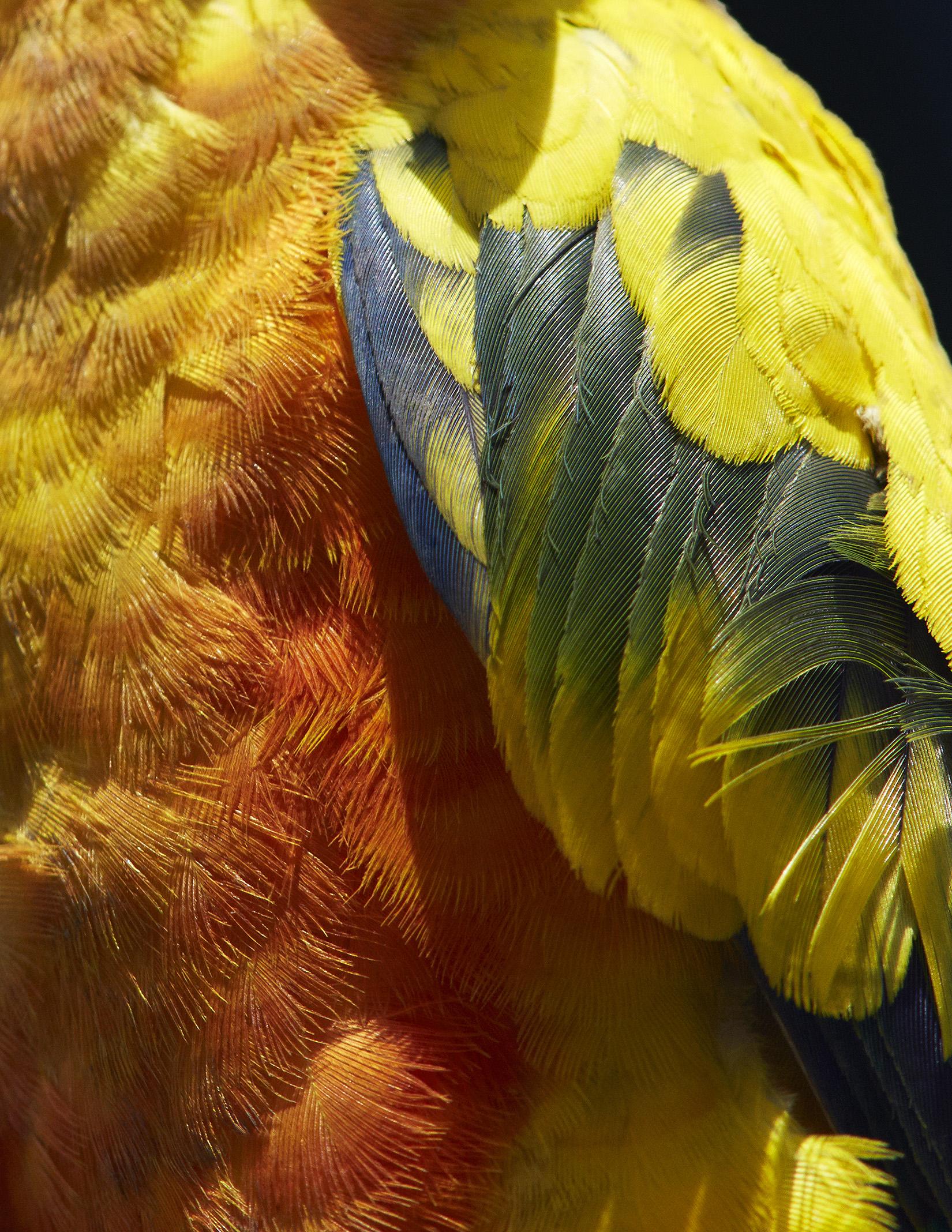 thomaslohr Birds 17