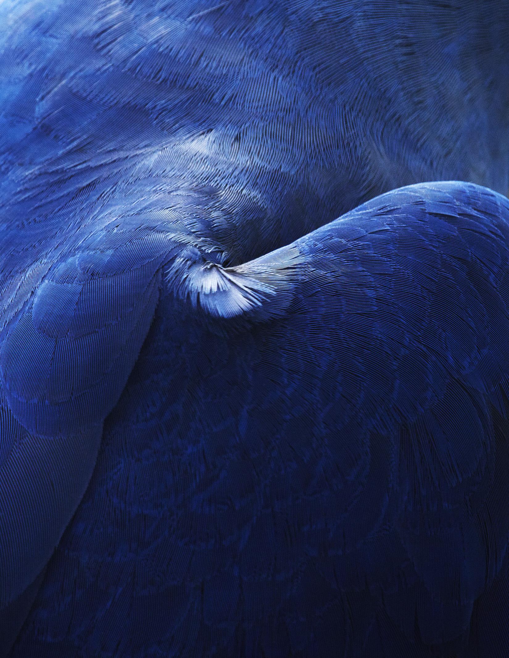 thomaslohr Birds 21