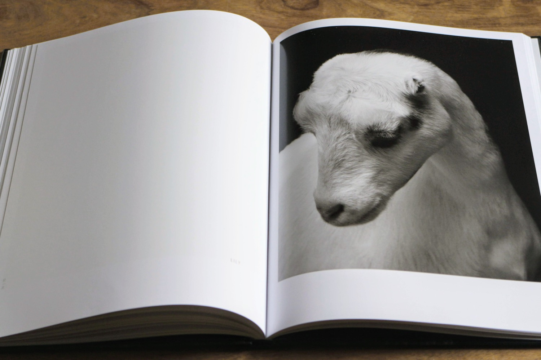 capre pecore 10