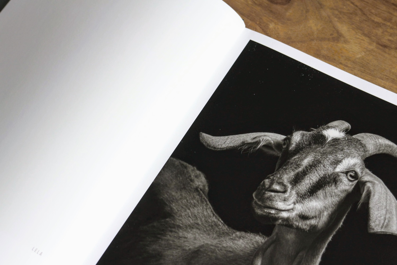 capre pecore 2