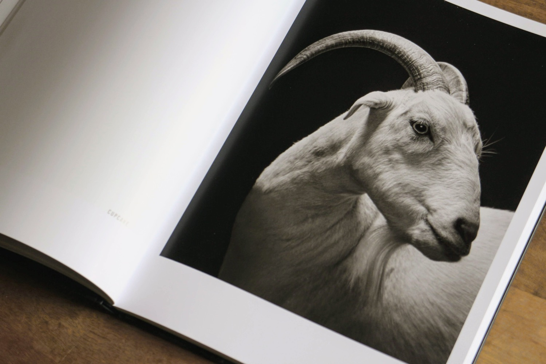 capre pecore 6