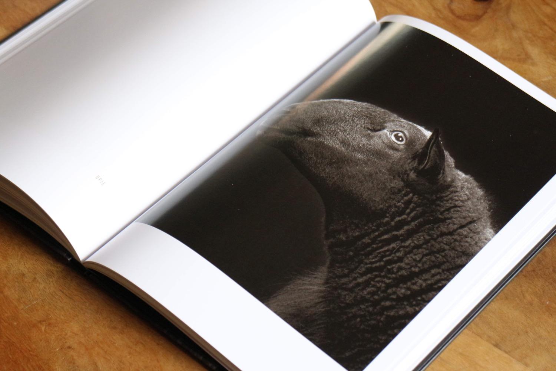 capre pecore 9