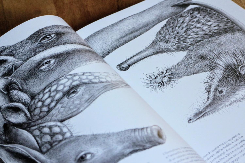 curiosi mammiferi 5