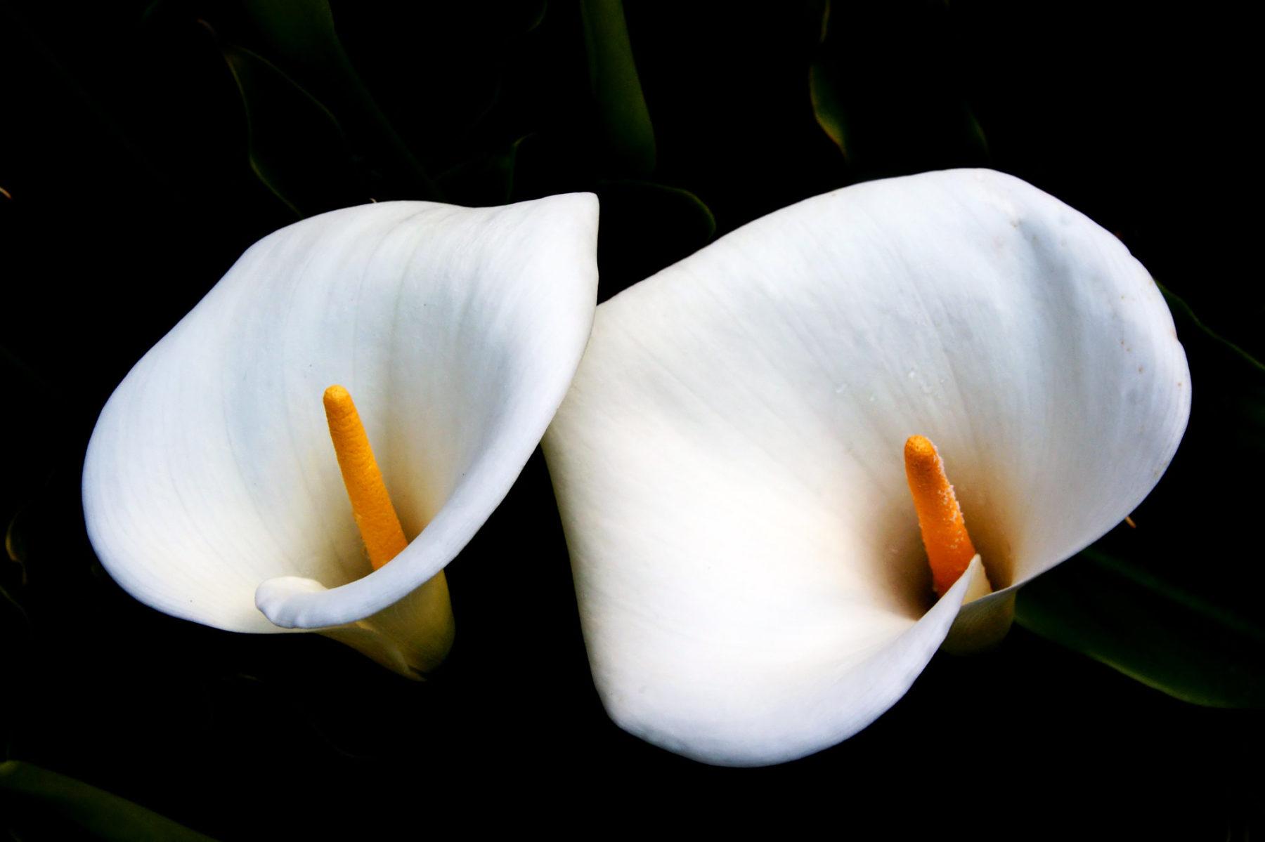 Bernard Spragg fiori