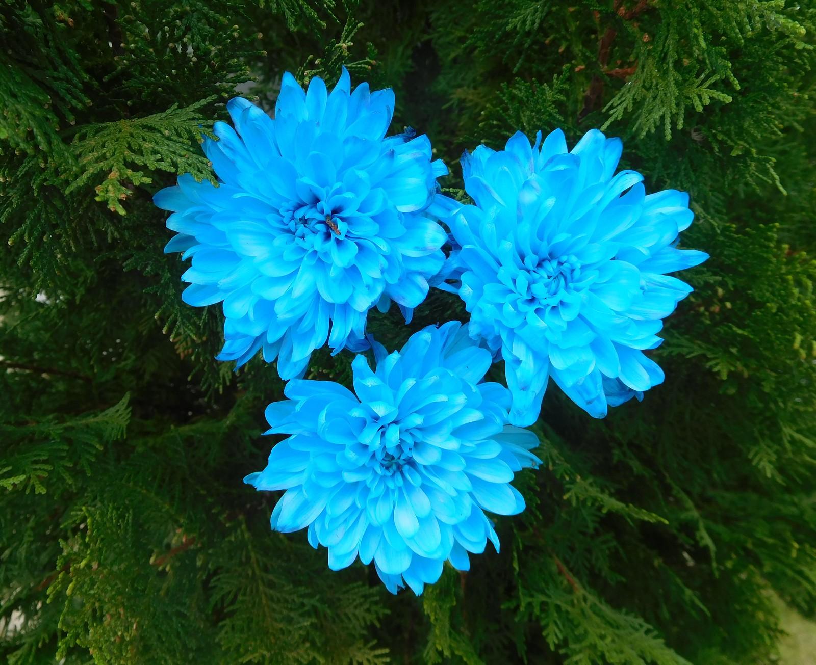 CHRISTIAN CHAYA fiori
