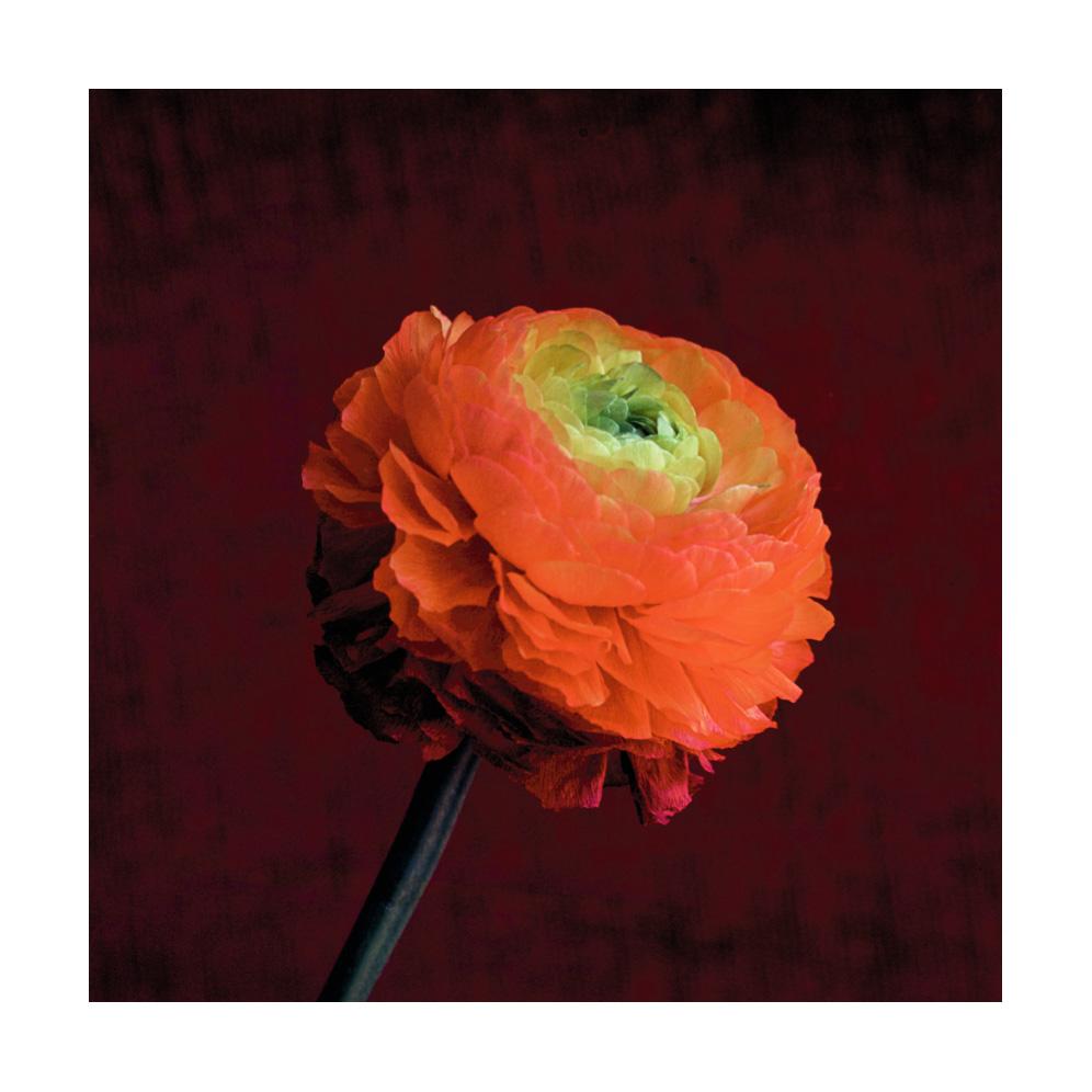 Daniel Philipona fiori
