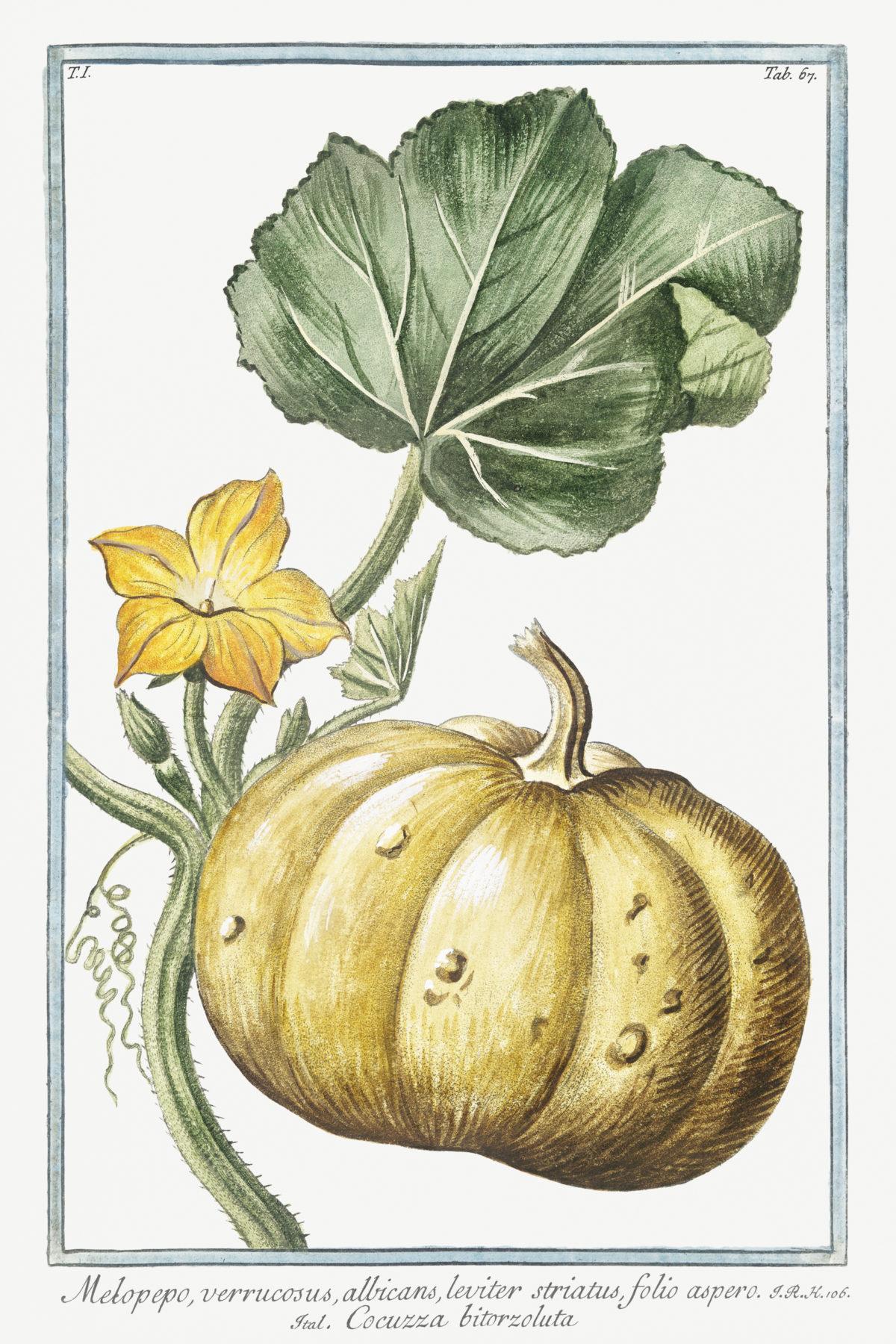 Hortus Romanus Juxta Systema Tournefortianum 1