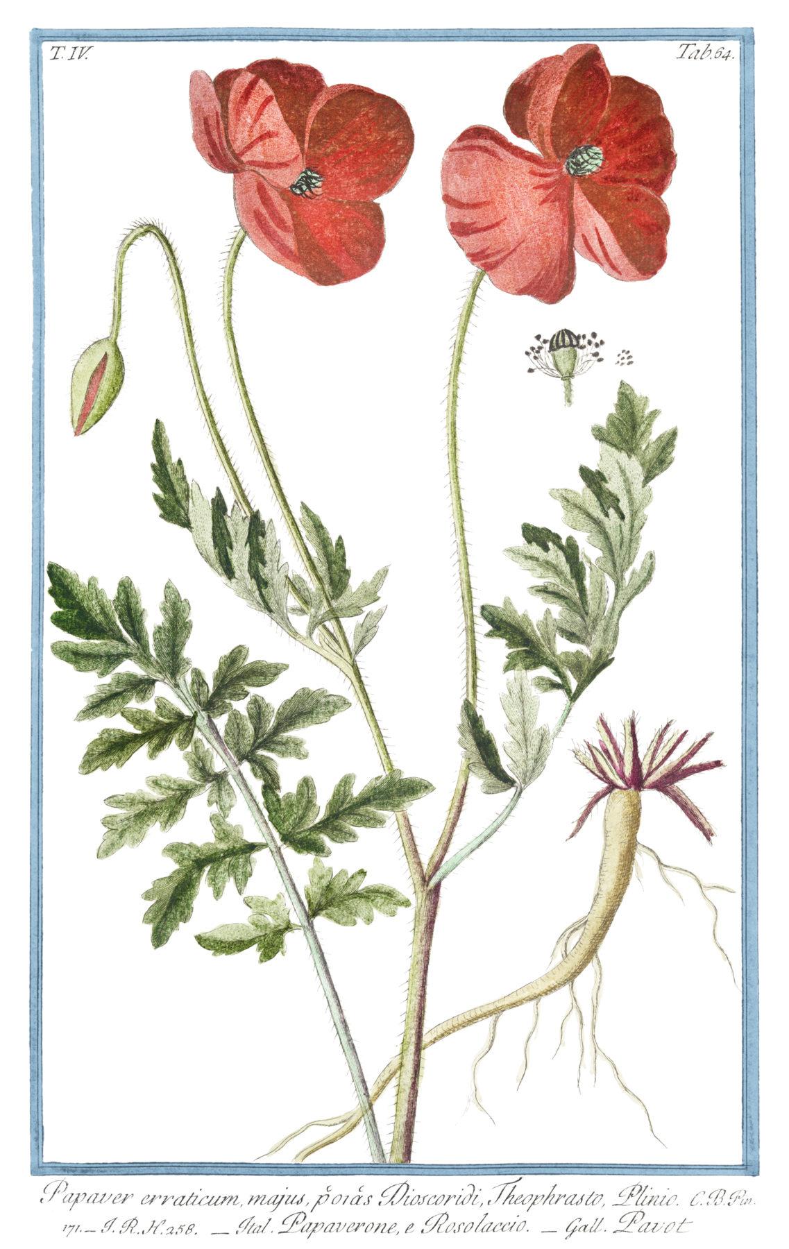 Hortus Romanus Juxta Systema Tournefortianum 2