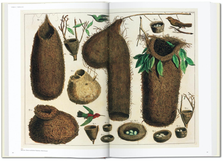 Seba Cabinet of Natural Curiosities taschen 4