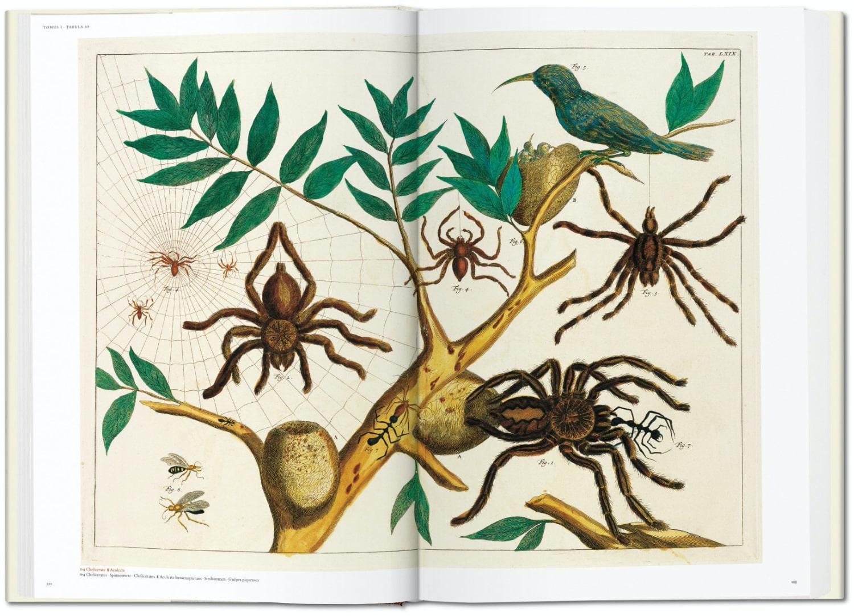 Seba Cabinet of Natural Curiosities taschen 5