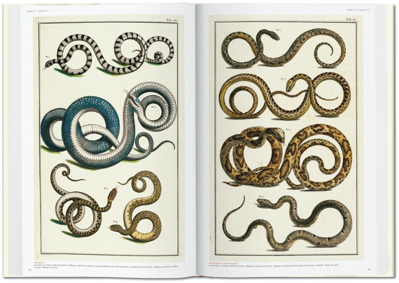 Seba Cabinet of Natural Curiosities taschen 6