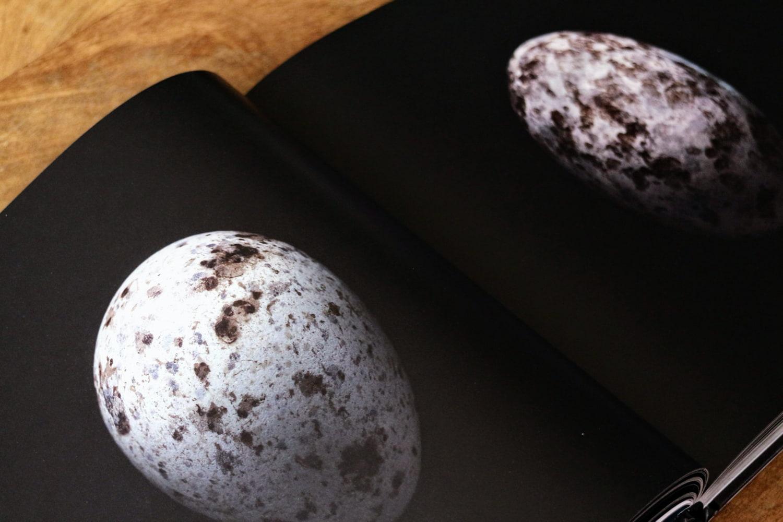 paul starosta uova 5 continents 10