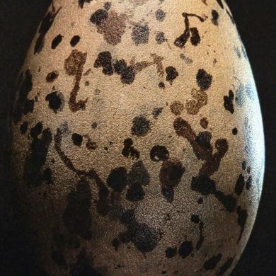 paul starosta uova 5 continents 14