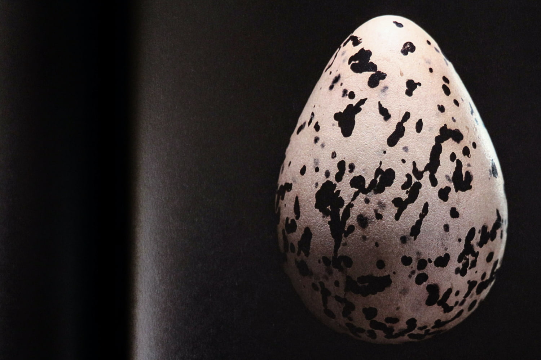 paul starosta uova 5 continents 9