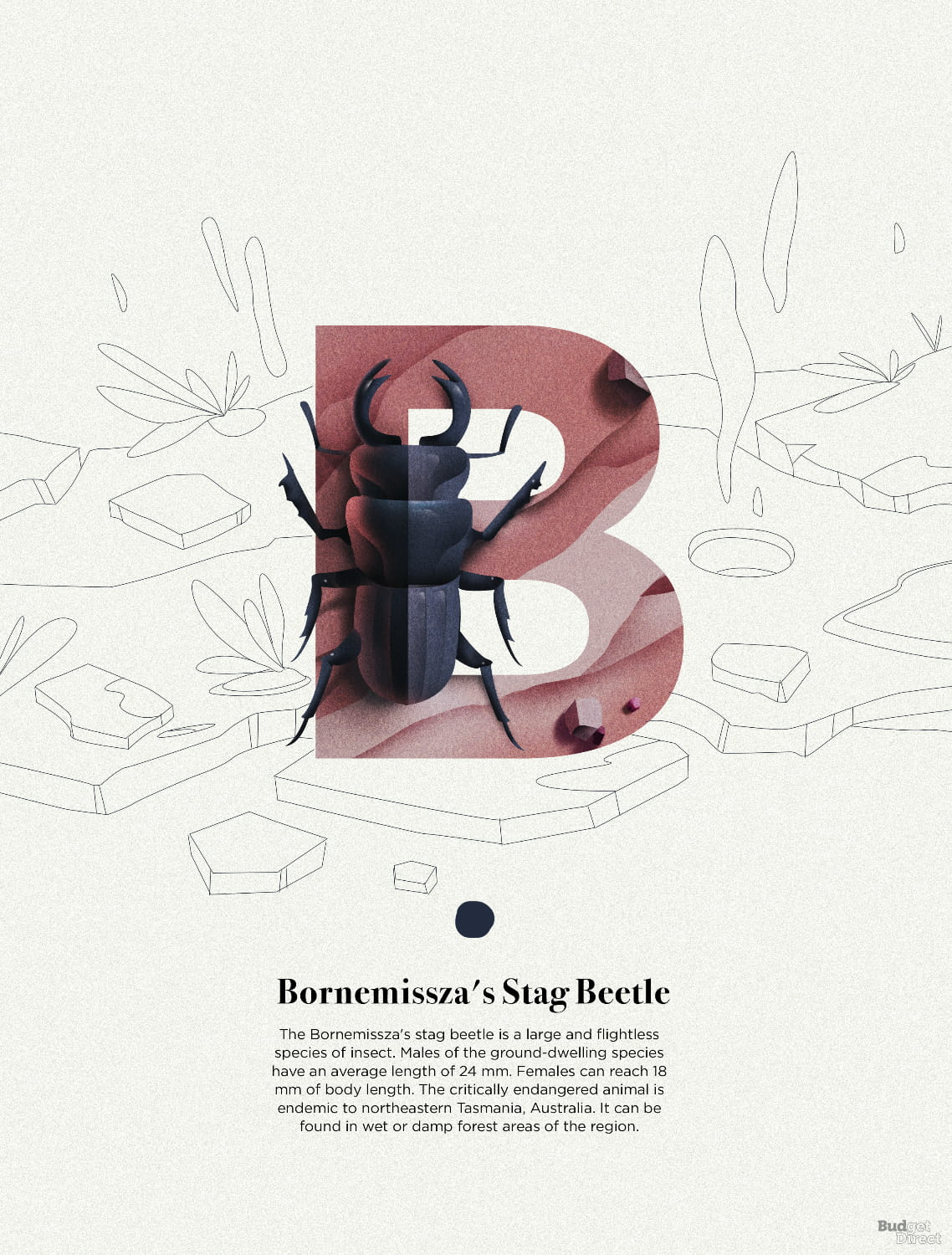 B is for Bornemisszas Stag Beetle