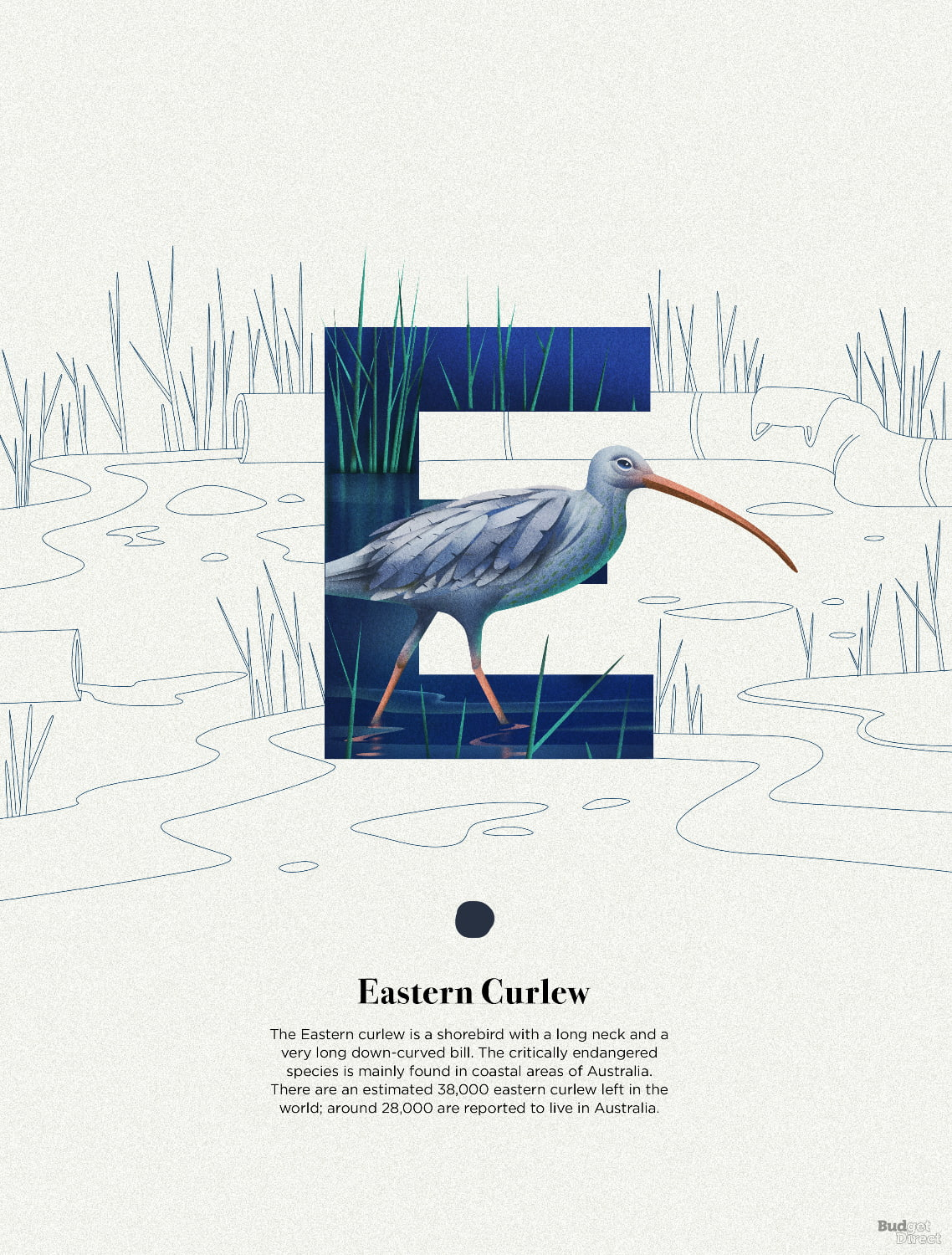 E is for Eastern Curlew