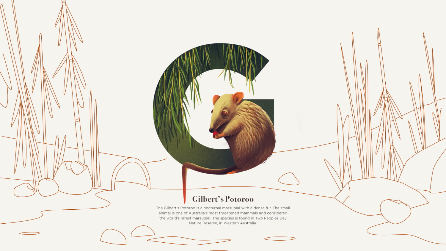 G is for Gilberts Potoroo