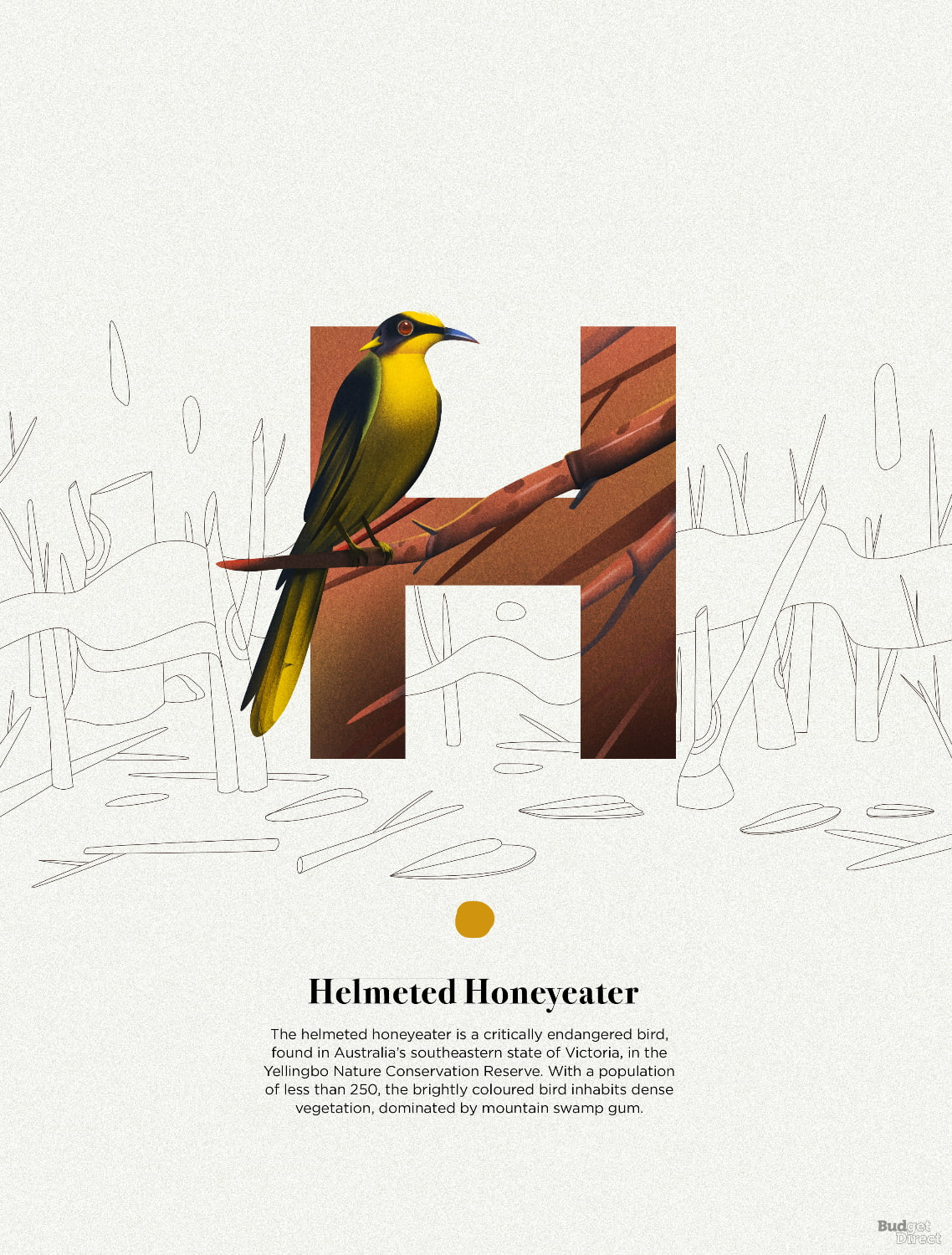 H is for Helmeted Honeyeater