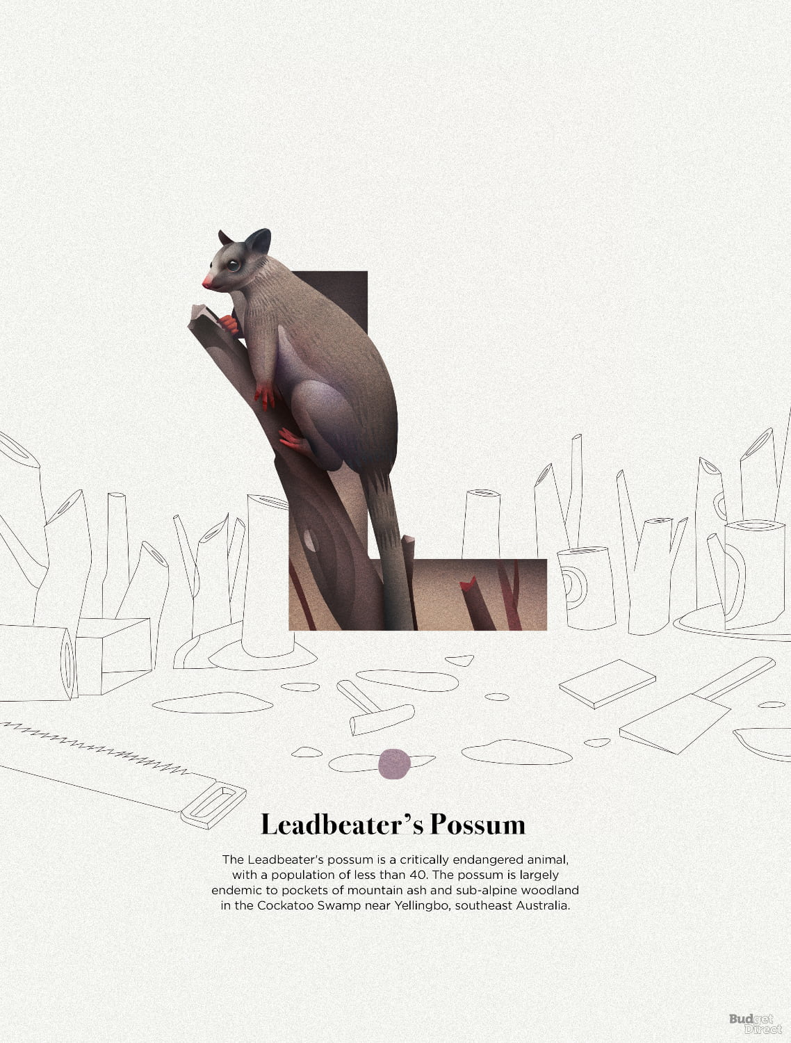 L is for Leadbeaters Possum