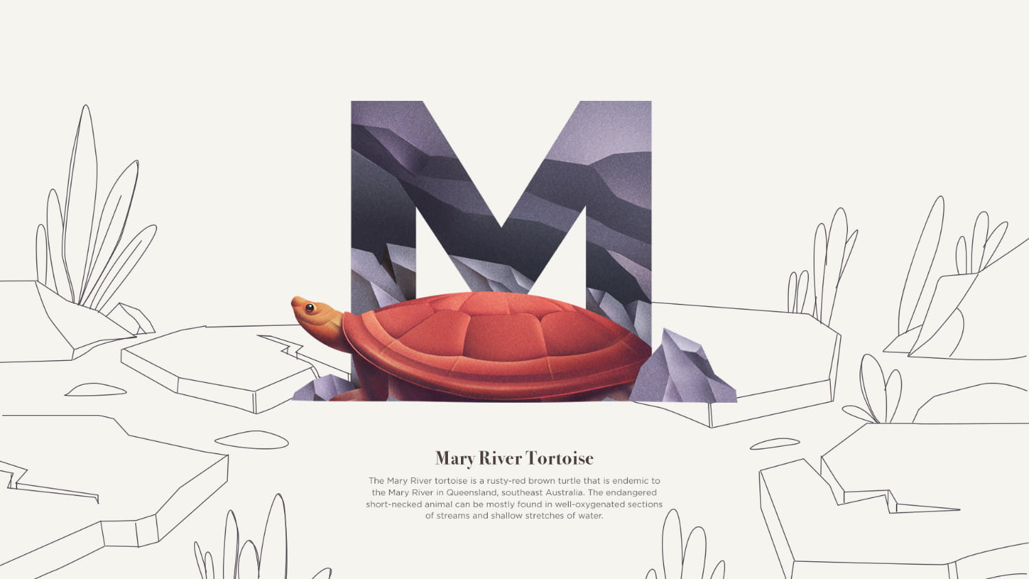 M is for Mary River Turtle